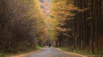 关门山树林高清实拍素材
