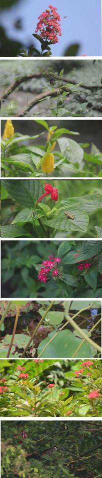 昆虫与植物花卉实拍视频