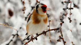 树上各种鸟类叫声近景特写集合视频
