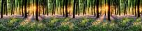 自然树林阳光底图高清大图