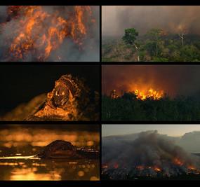 火灾森林着火实拍视频