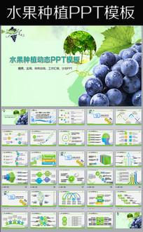绿色生态农业水果蔬菜农产品ppt模板