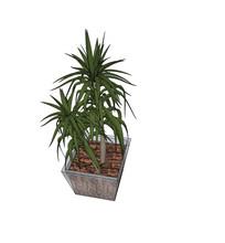 办公桌盆栽植物