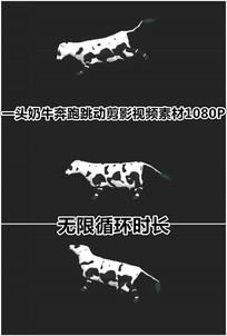 一头奶牛奔跑跳跃走路前进动画视频