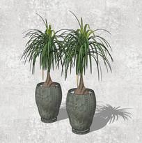 酒瓶兰植物SU盆栽