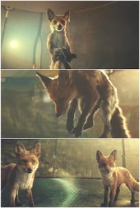 两只小狗狐狸跳跃落地后视频