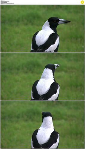 小鸟展翅飞翔