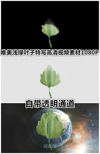 唯美中国风水墨画出树叶绿叶视频