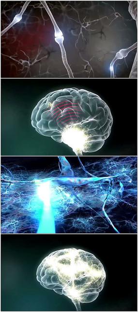 神经元传导头脑信息视频