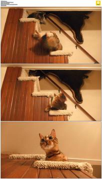 楼梯上的两只小猫玩耍实拍视频素材