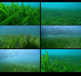 航拍水底世界视频