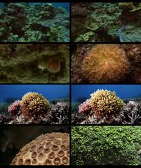 海底世界海生物珊瑚碓视频素材