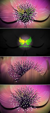 花瓣展示标志演绎ae模板