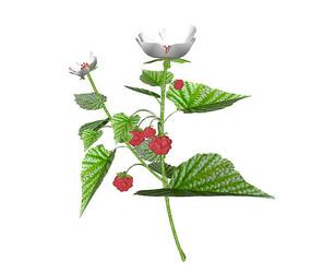 野草莓植株SU模型