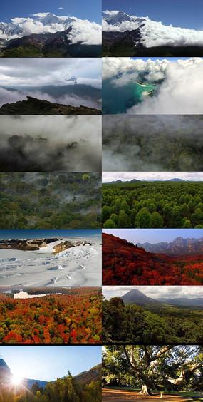 原始森林丛林树木视频