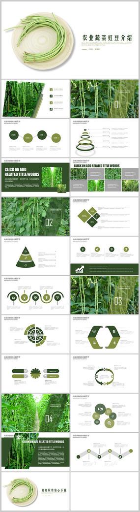 绿色农产品豇豆介绍PPT