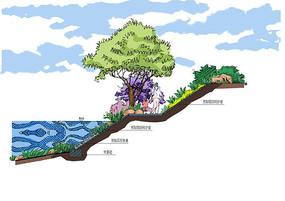 自然式驳岸