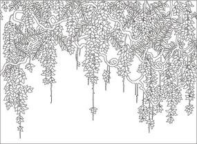 白描紫藤花