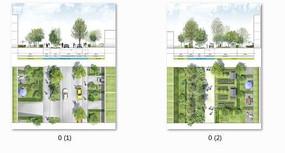 道路绿化设计