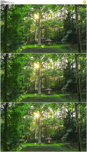 森林闪烁的阳光实拍视频素材