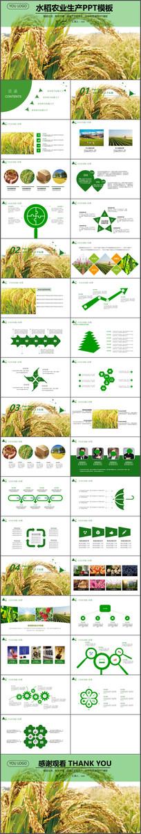 水稻农业生产水稻种植PPT