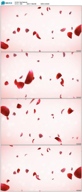 婚礼玫瑰花瓣视频素材 aep