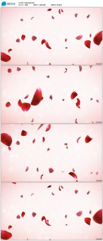 婚礼玫瑰花瓣视频素材
