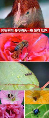 蜜蜂采蜜花朵拍昆虫镜头特写