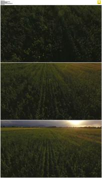4K穿越农田实拍视频素材