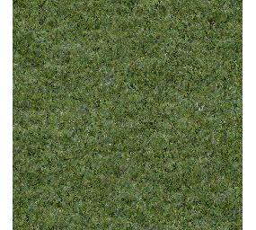 常见草坪平面贴图 JPG
