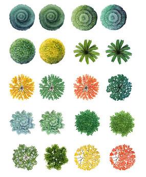 植物平面图例
