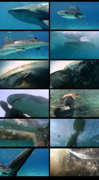 鲨鱼吃海龟视频