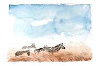 非洲草原斑马插画