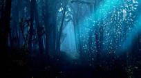 唯美安静仙境森林LED视频
