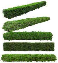 绿篱psd分层素材