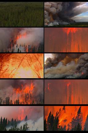 森林着火火灾视频