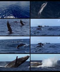 蓝色的海洋视频