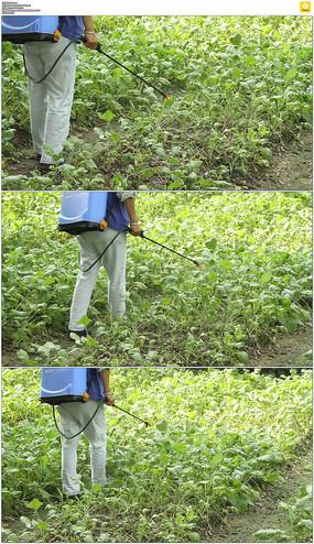 农民喷洒农药实拍视频素材