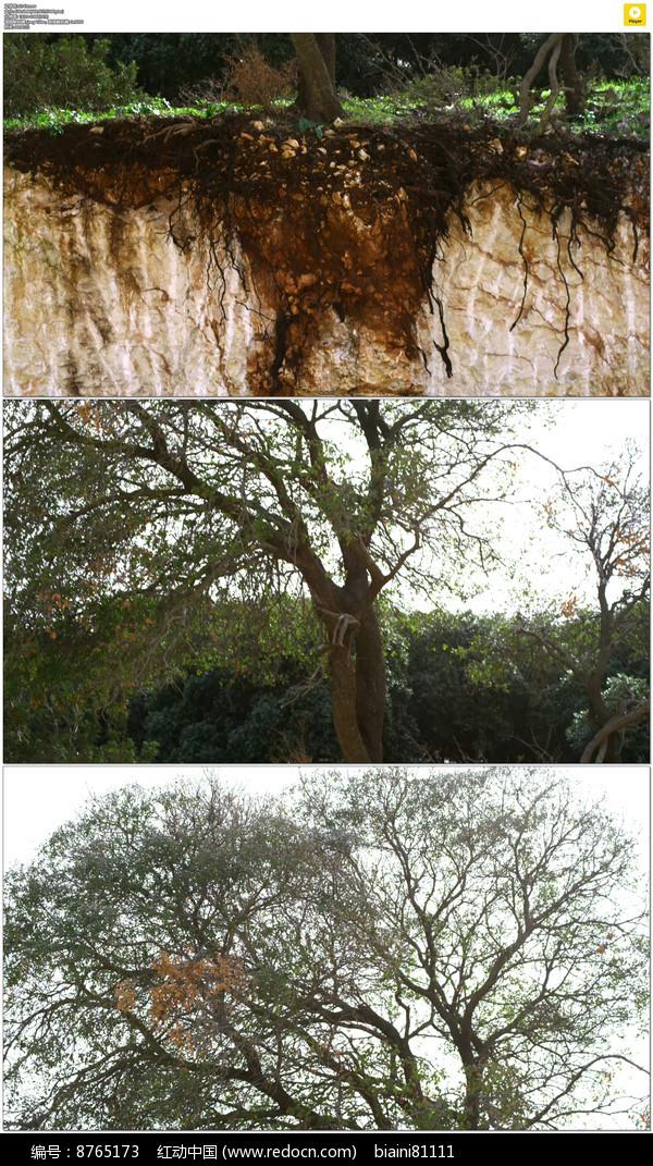 崖壁上的树木实拍视频素材图片