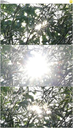 阳光穿过树梢