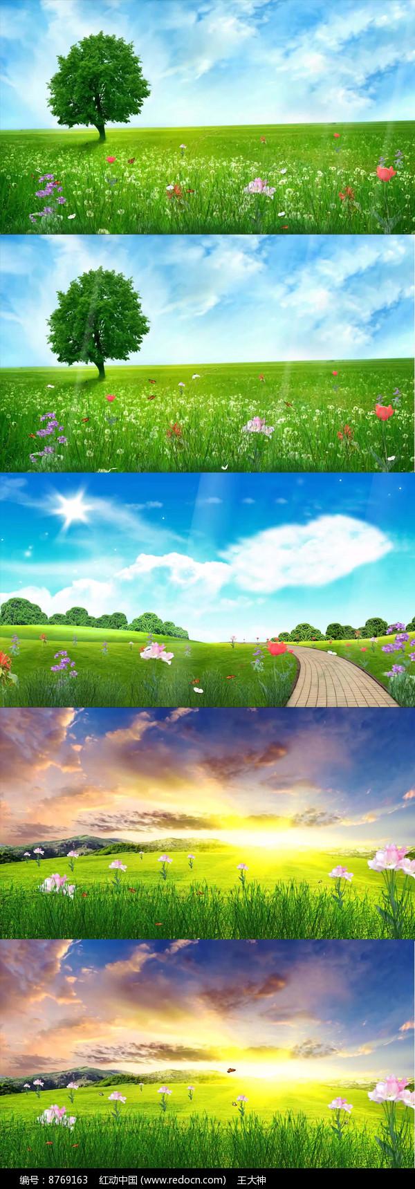 春天气息鲜花阳光草地视频图片