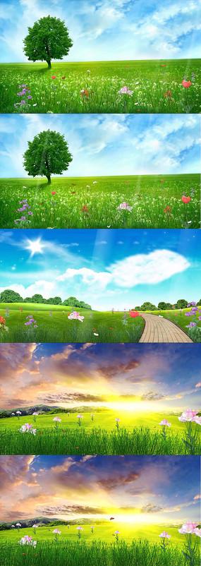 春天气息鲜花阳光草地视频