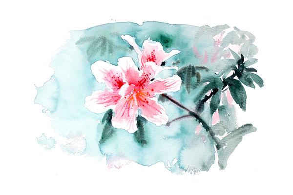 绽放的花插画