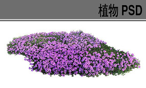 草本花卉ps植物素材
