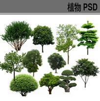 乔木类PSD分层素材