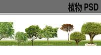 乔木类PSD分层植物