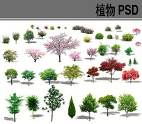 植物psd分层素材