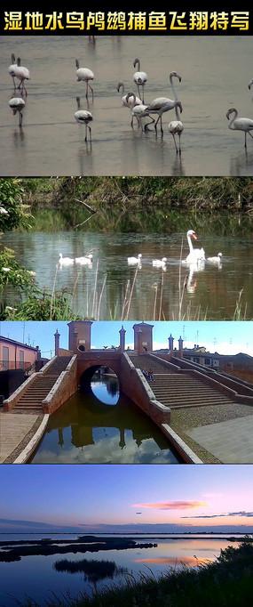 湿地水鸟鸬鹚捕鱼动态视频