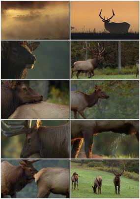 保护野生动物视频