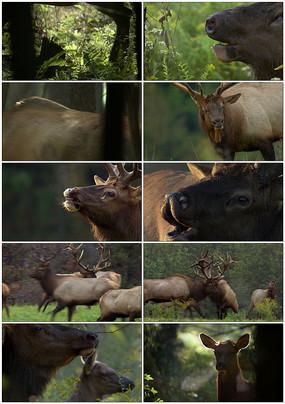 保护动物视频素材